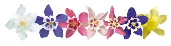 Aquilegia                                       hybrida F₁                                       Spring Magic®                                       Navy & White