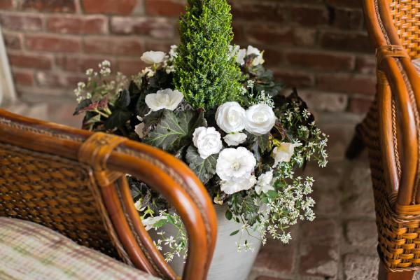 Begonia                                       tuberhybrida F₁                                       Nonstop® Joy                                       Mocca White
